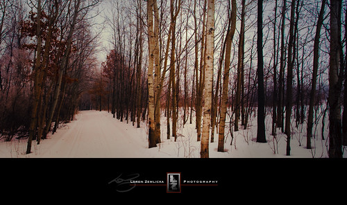 road trees winter snow nature wisconsin forest landscape photography photo woods midwest image path january picture madison lane canonef1740mmf4lusm 2010 canoneos5d lakefarmpark lorenzemlicka