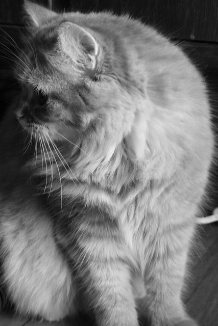 Penelope Cat Black