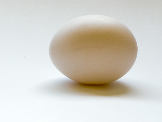 The Egg | by Charles G. Haacker