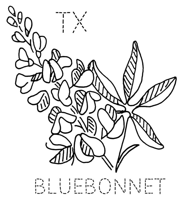bluebonnet state flower coloring page coloring pages
