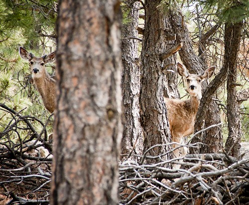 trees summer vacation usa pine forest colorado butte hiking hike co muledeer peyton