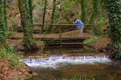 nature reserve, stream, woodland, water feature, water, river, creek, body of water, watercourse, forest, natural environment, wilderness, state park, jungle,