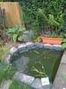 Fish pond 2009