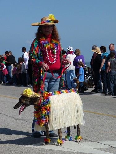 Greyhound in a Grass Skirt
