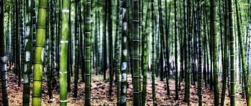 無料写真素材, 自然風景, 森林, 竹・竹林, 緑色・グリーン, 風景  中華人民共和国