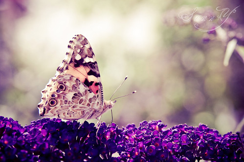 ~What the caterpillar calls the end of the world, the master calls a butterfly~