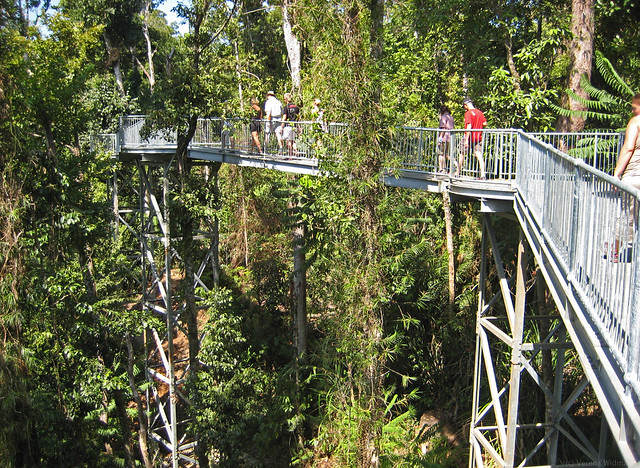 Things to Do MaMu Rainforest Canopy Walkway