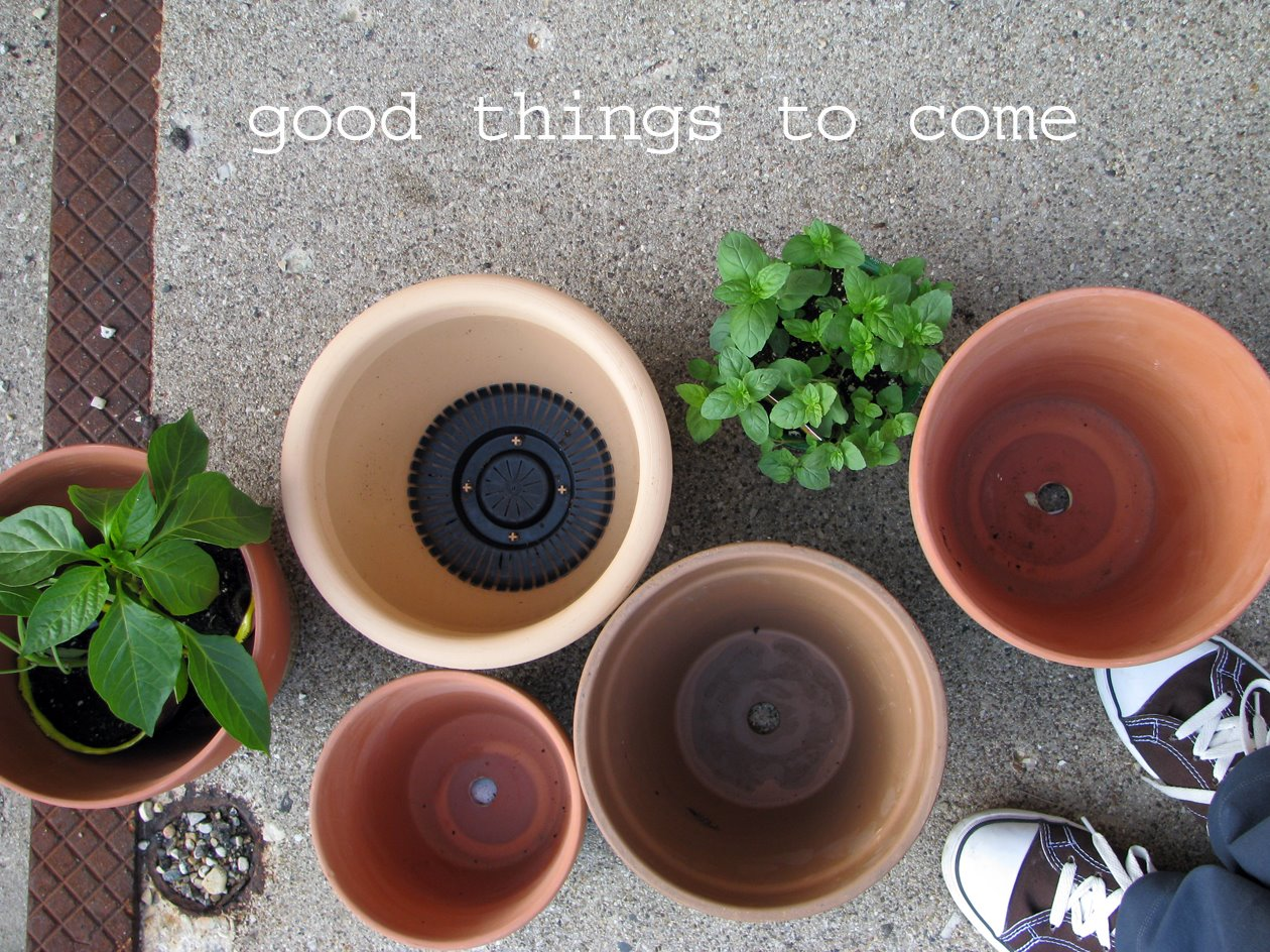 pots for my herb garden and my favorite tennies