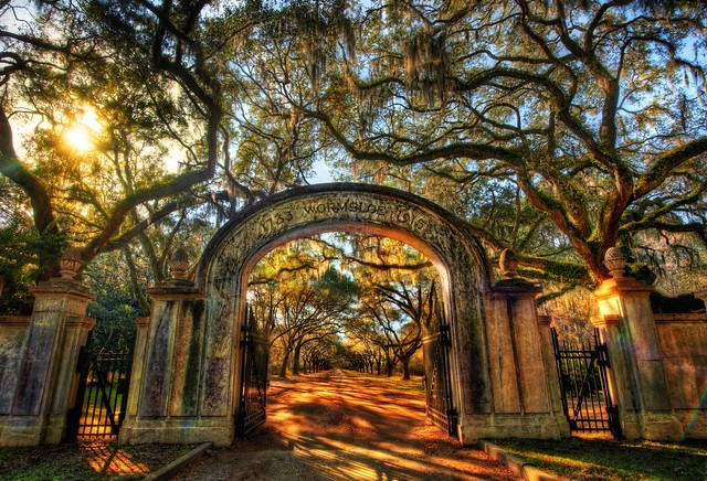 Wormsloe the endless forest of savannah 16 000 pixels wide