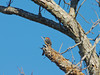 Standing Tall in the Pecan Tree by Woolmarket100