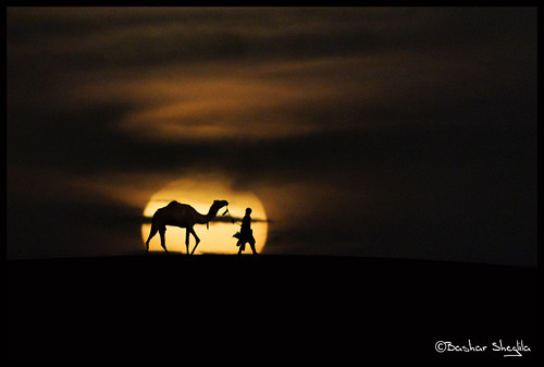 life sunset classic sahara sand desert dunes explore camel libya tuareg ghadames الصحراء صحراء مها ليبيا explored ابل ري الليبية ghadamis غدامس طوارق توارق الطوارق تارقي التوارق mygearandmepremium ايموهاغ الهقار
