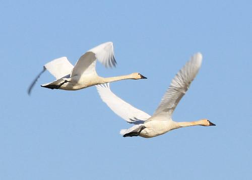 Driftless Area Fall Bird Migration