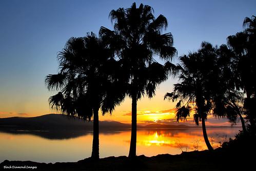 sunset sunsets australia greatlakes nsw forster palmsunset wallislake beautifulearth arecaceae bdi pacificpalms livistonaaustralis tiona midnorthcoast cabbagepalm cabbagepalms australiansunsets forsternsw greatlakestourism tionasunset pacificpalmsnsw