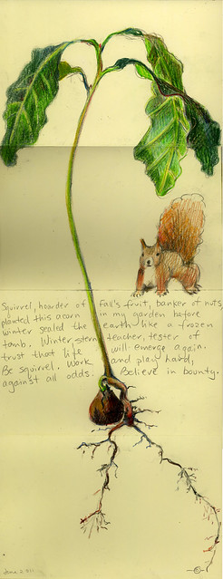 Squirrel & Oak Seedling