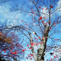 京都。嵐山嵯峨野。