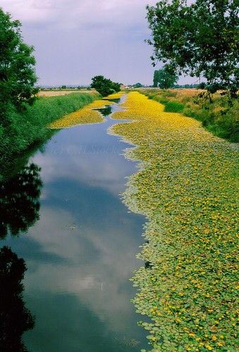 Kent Canal by Stocker Images