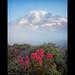 Mount Rainier by Jesse Estes