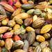 Mazorcas de Cacao
