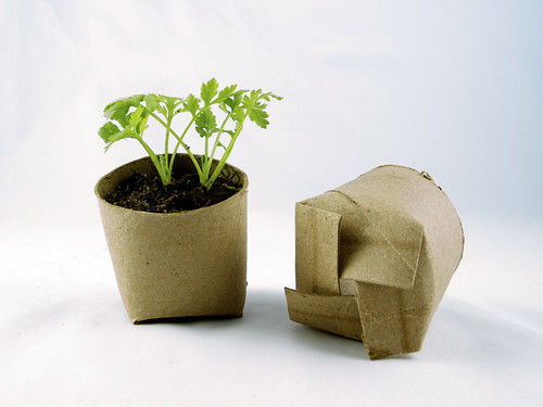 Seedling in a toilet paper roll repurposed as a mini planting pot | by girlingearstudio