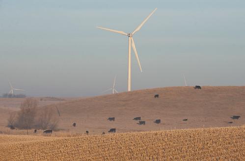 green landscape countryside corn energy power cattle wind photos ground iowa hills electricity crops livestock bovine renewable windgenerators stuble forestcity joemurphy josephlmurphy jmurphpix
