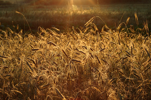 morning sun nature sunrise nikon d70 web belarus beams