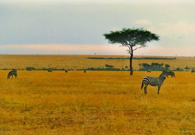 AFRICA grassland   Flickr - Photo Sharing!