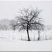 kleiner Baum im Schnee