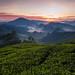 """Tea Paradise I"" Cameron Highland, Malaysia 2010 by ChKESE"
