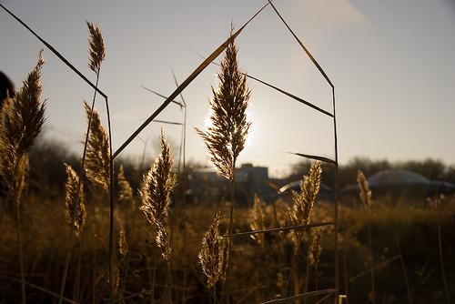 sky nature sunrise twilight asia europe wheat centralasia kazakhstan kazajstan kazajstán atyrau kazajistan казахстан kazajistán атырау
