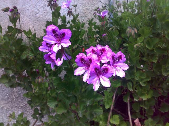 Tempo di fiori semplici ma basta il pensiero per for Fiori semplici