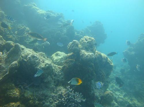海洋生物資源豐富。(圖片來源:海洋國家公園)