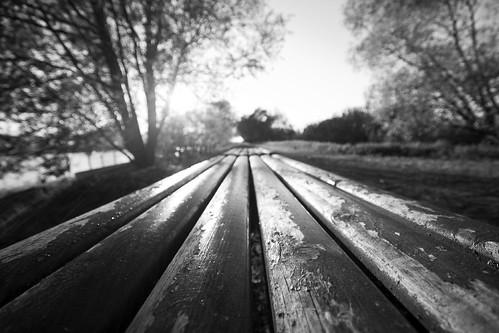 trees white black lines bench sweden sverige linköping sigma1020mmf456exdchsm canoneos7d