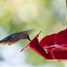 Hummingbird by SapphiraFey