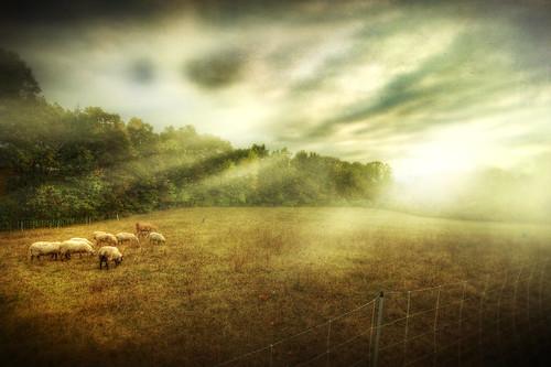 light sunset sunlight mist texture field fog rural photoshop canon painting landscape haze sheep farm massachusetts newengland stormy calm dunstable sigma1020mm 40d falllandscape patrickcampagnone