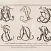 006-Estampas REAL ACADEMIA DE BELLAS ARTES DE SAN FERNANDO -© Fundación Biblioteca Virtual Miguel de Cervantes