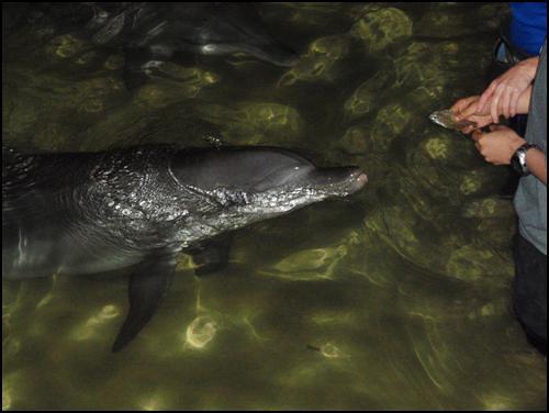 Nari The Dolphin
