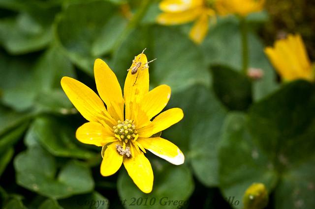Flower + Spider =