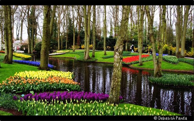 Tulip Garden Holland God 39 S Canvas Flickr Photo Sharing
