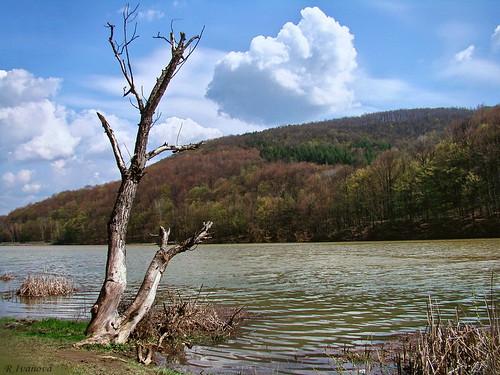 blue sky lake tree nature water clouds landscape sony природа българия mygearandme rivanova риванова