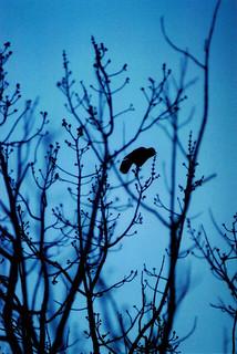 dusk bird sillhoette