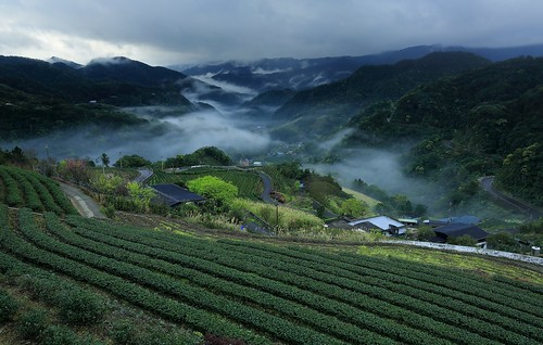 茶園觀色 ~ Dawn and  Sea of clouds of Tea Garden @ 坪林 Pinglin  ~