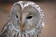 fotografia ptaki