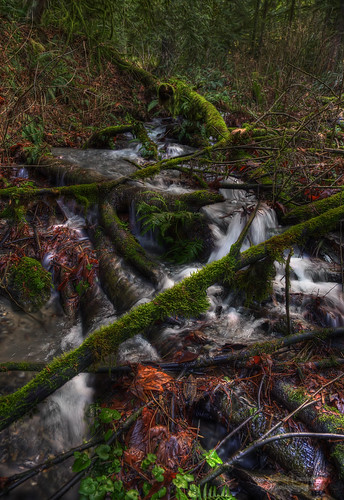 autumn lake mountains fern fall leaves creek geotagged waterfall moss stream decay logs falls vail cascades wetlands ferns bridal hdr chilliwack cheam janusz leszczynski geo:lat=4919483 geo:lon=121716552 004425