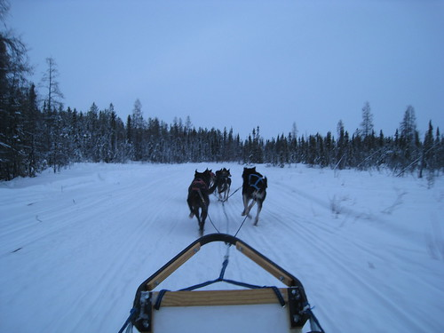 4223864894 a64ac32585 Dog Sledding