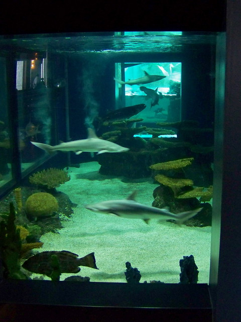 Small shark tank flickr photo sharing Small sharks for fish tanks