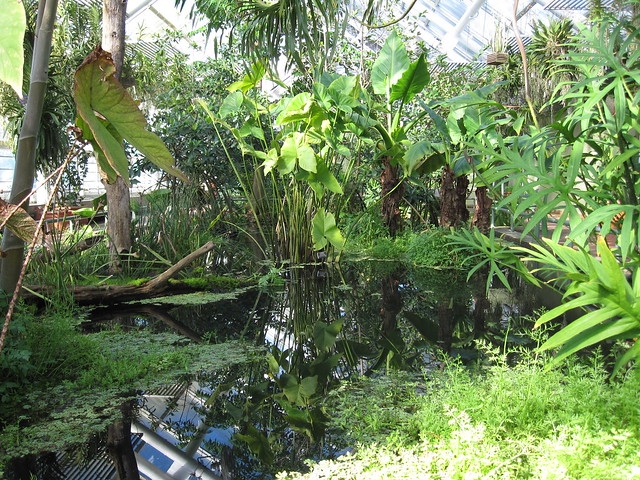 Beautiful sunny morning in the Aquatic House of the Steinhardt Conservatory. Photo by Rebecca Bullene