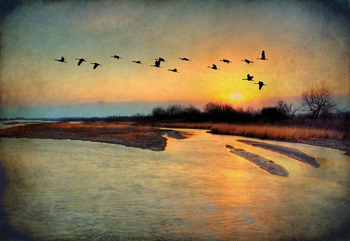 sunset texture birds photoshop river nebraska glare fowl migration sandhillcranes earthday roost platteriver sandbars texturedlayer artofimages sandhillcranesunset bestcapturesaoi magicunicornverybest selectbestexcellence magicunicornmasterpiece sbfmasterpiece jackaloha2