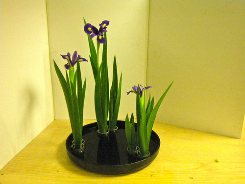 Iris - summer arrangement - near view by Ikebana Marisa