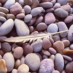 Feather & Pebbles
