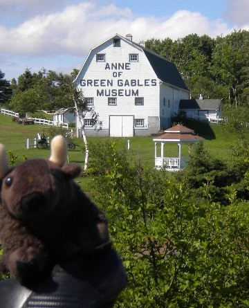 Buddy at the Anne of Green Gables Museum on Prince Edward Island